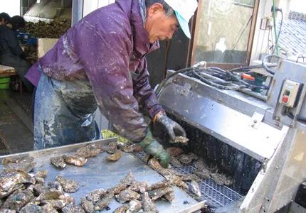 牡蠣の洗浄