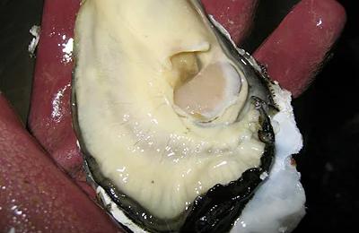 5. 平らな殻の貝柱を切断